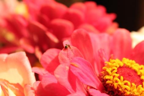 fotos-bouquets-mercedesmoreno02