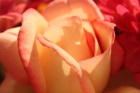 fotos-bouquets-mercedesmoreno