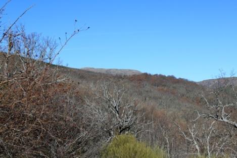 Hayedo de Montejo - panorama